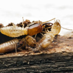 termite control boca raton