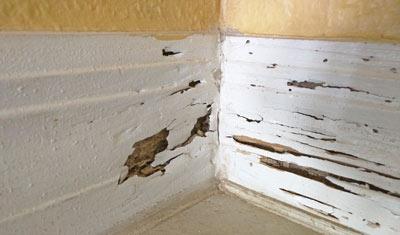 home termite damage