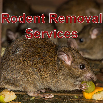 residential rodent control boca raton fl